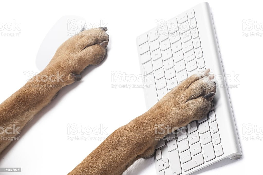 Dog's paw on the keyboard royalty-free stock photo