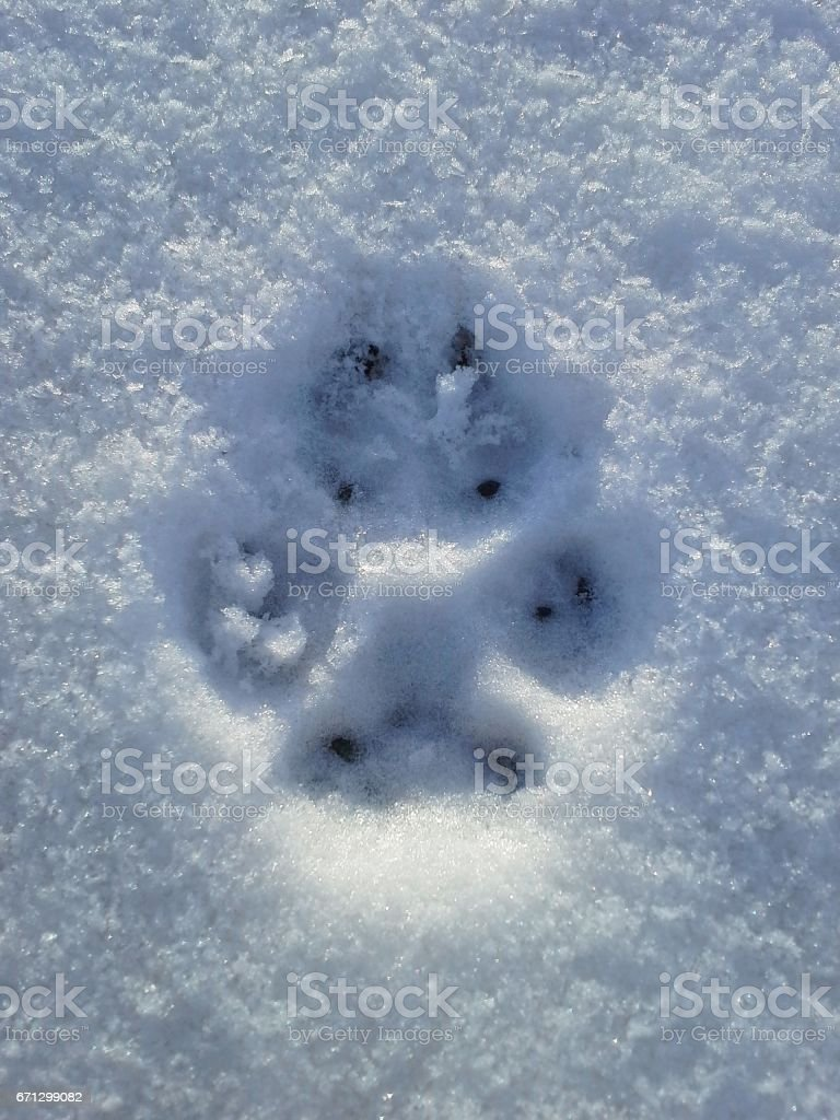 Dog's Pawprint in the Snow stock photo