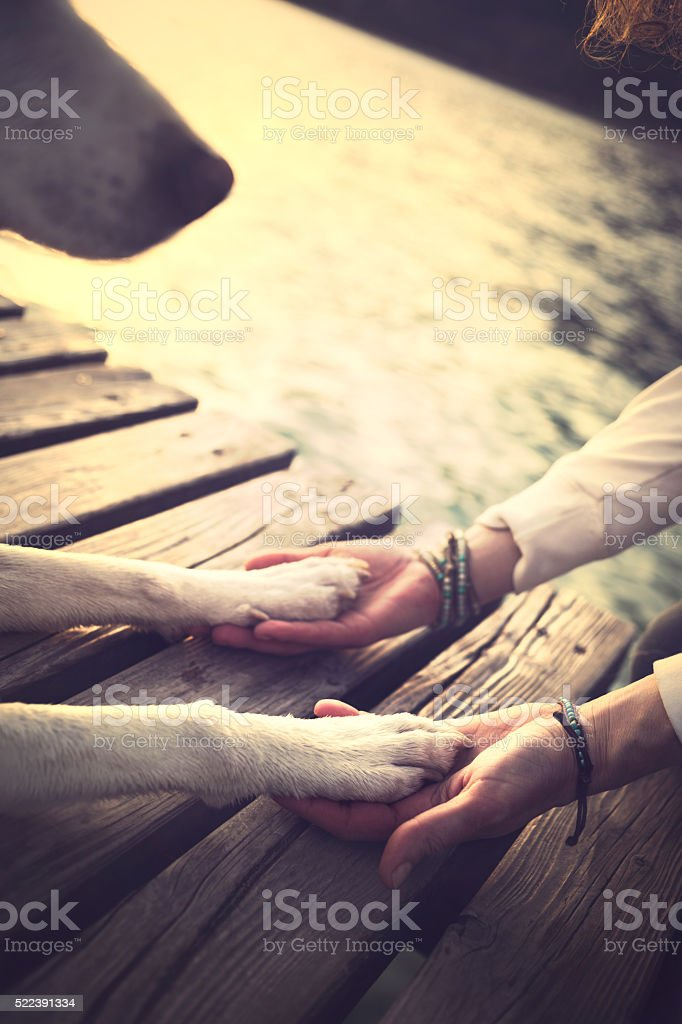 Dog's paws and man's hands gesture of friendship stock photo