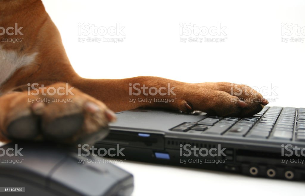 Dog's paws on the laptop royalty-free stock photo