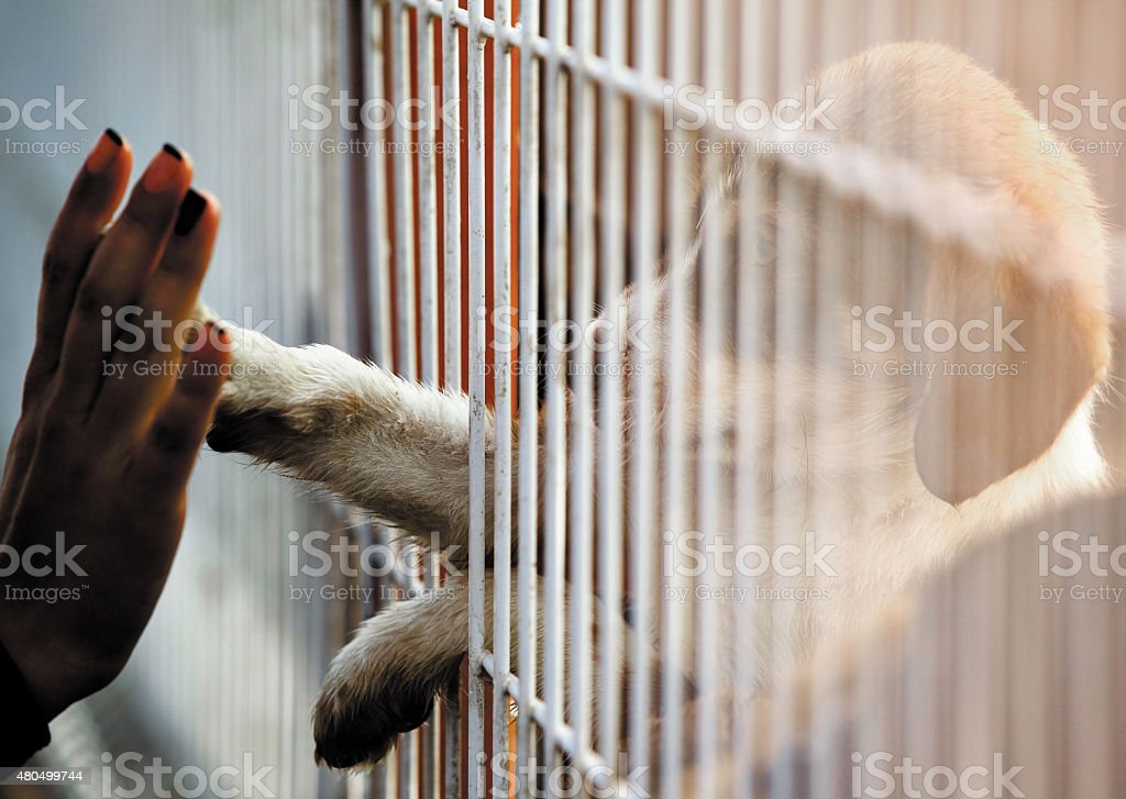dogs people connection adoption stock photo