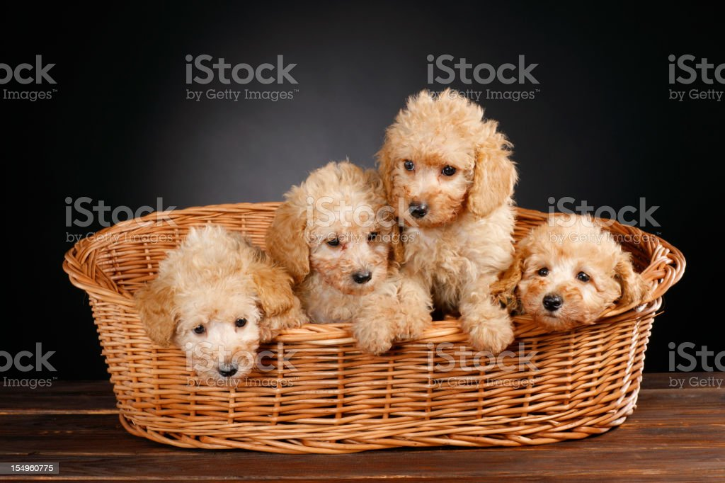 Dogs stock photo
