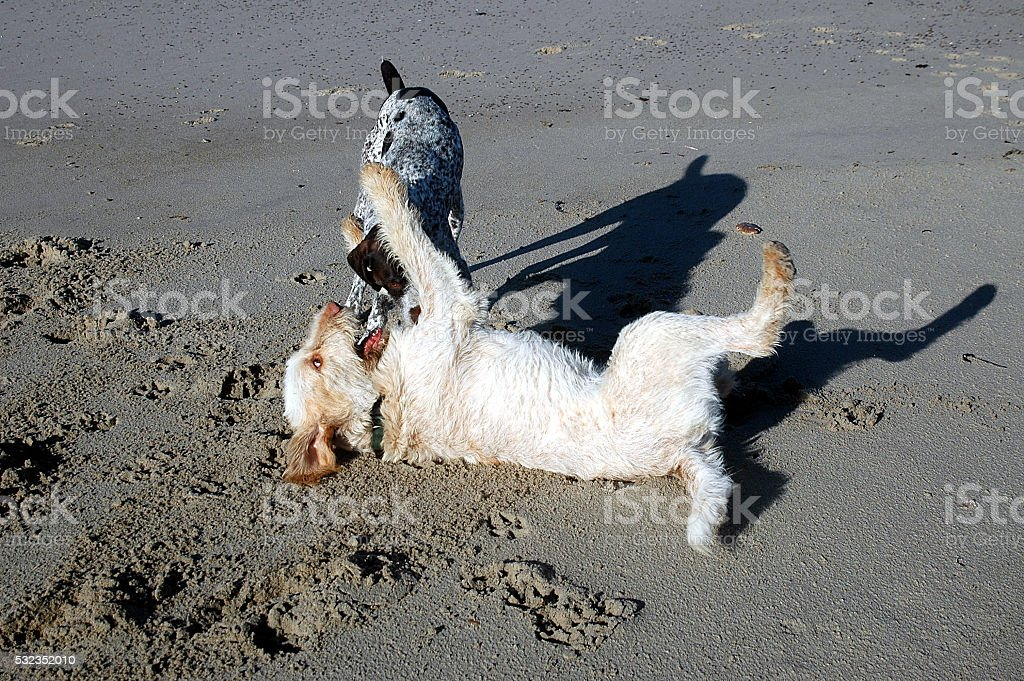 Dogs play stock photo