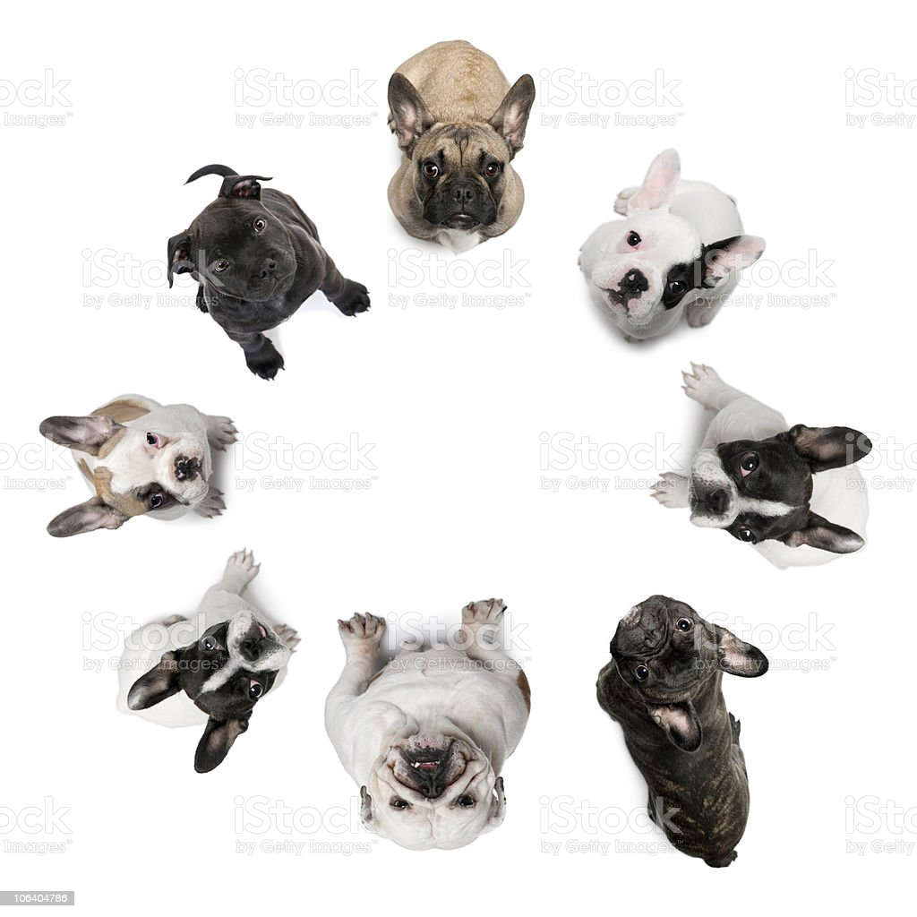 dogs sitting in a circle, looking up at the camera. royalty-free stock photo