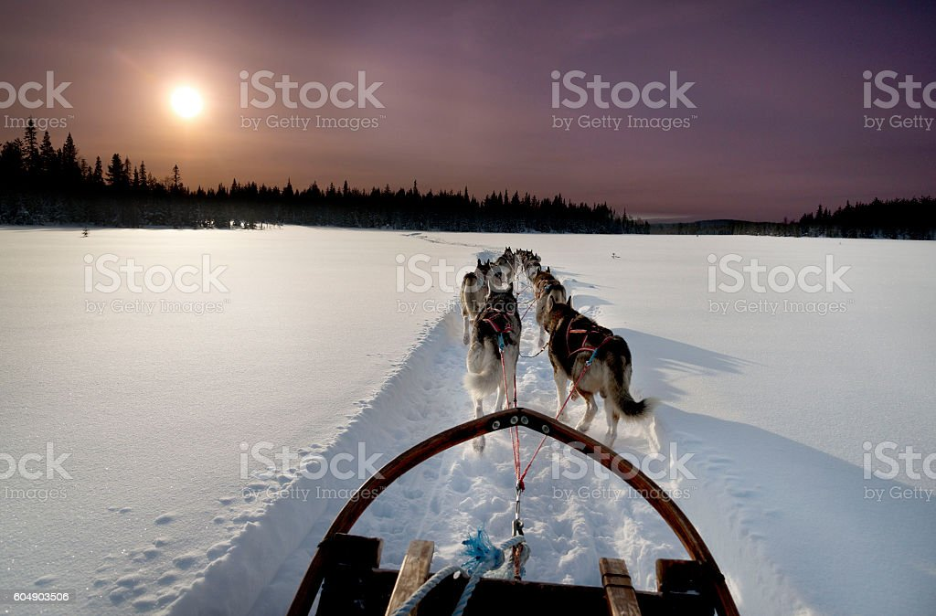 Dogs sledding with huskies in a beautiful wintry landscape, Lapland stock photo