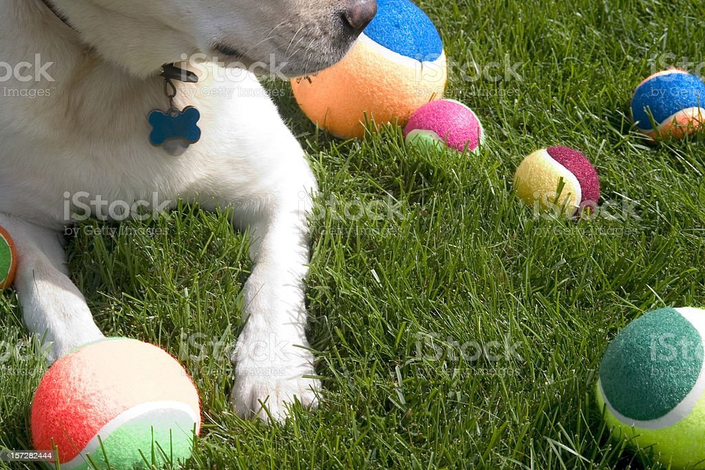 Dog's Toys royalty-free stock photo