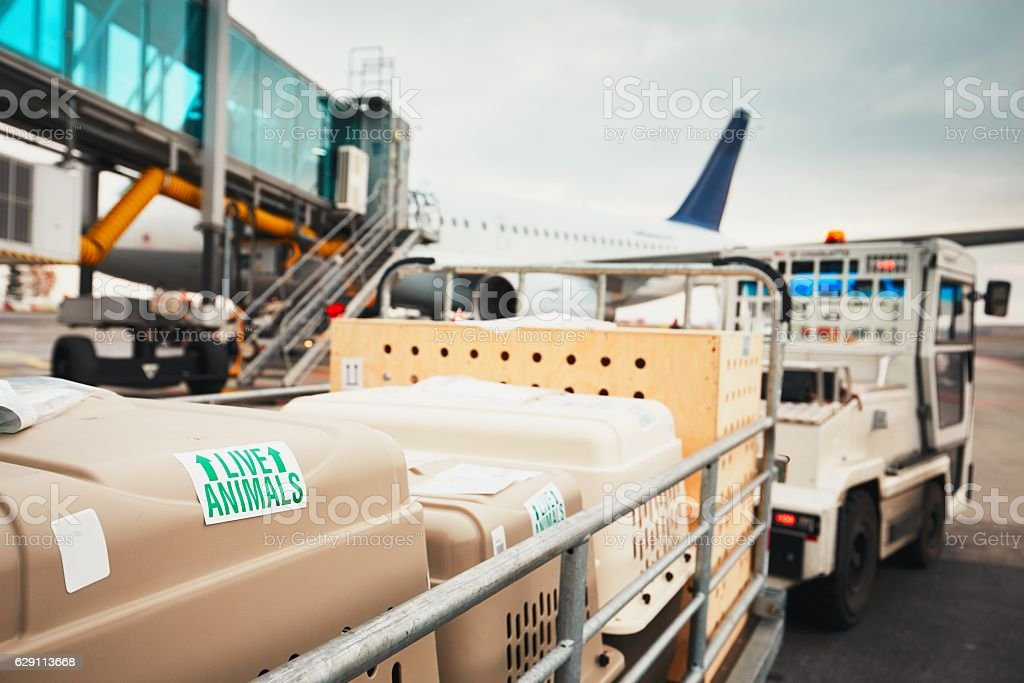 Dogs traveling by airplane stock photo