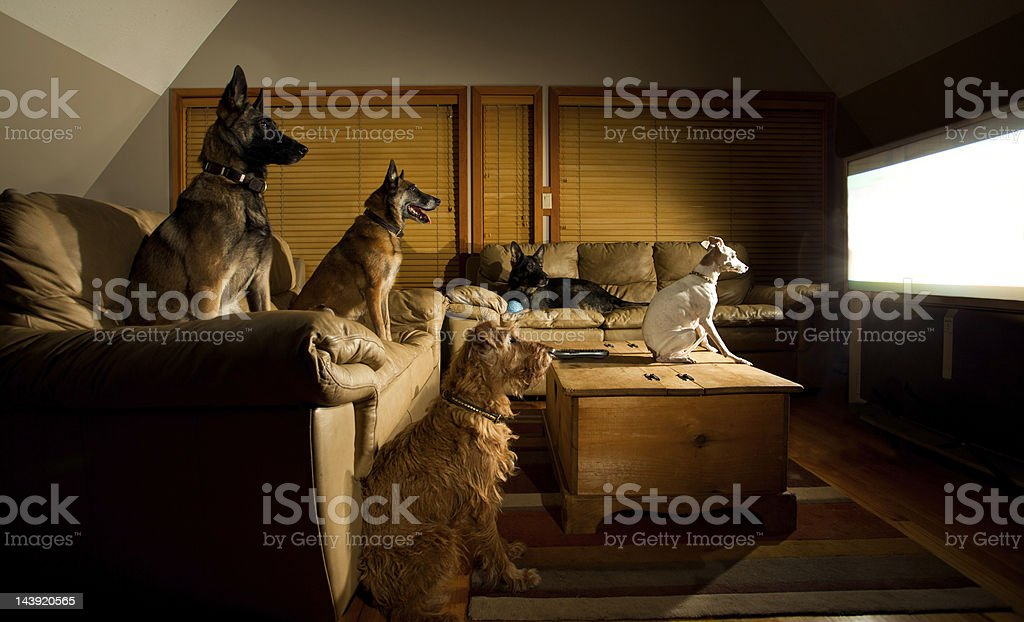 Dogs Watching TV stock photo