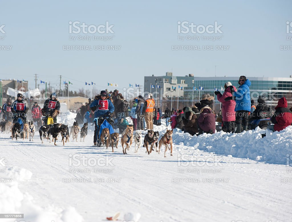 Dogsled Racing. stock photo