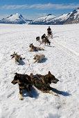 Dogsledding  In Alaska