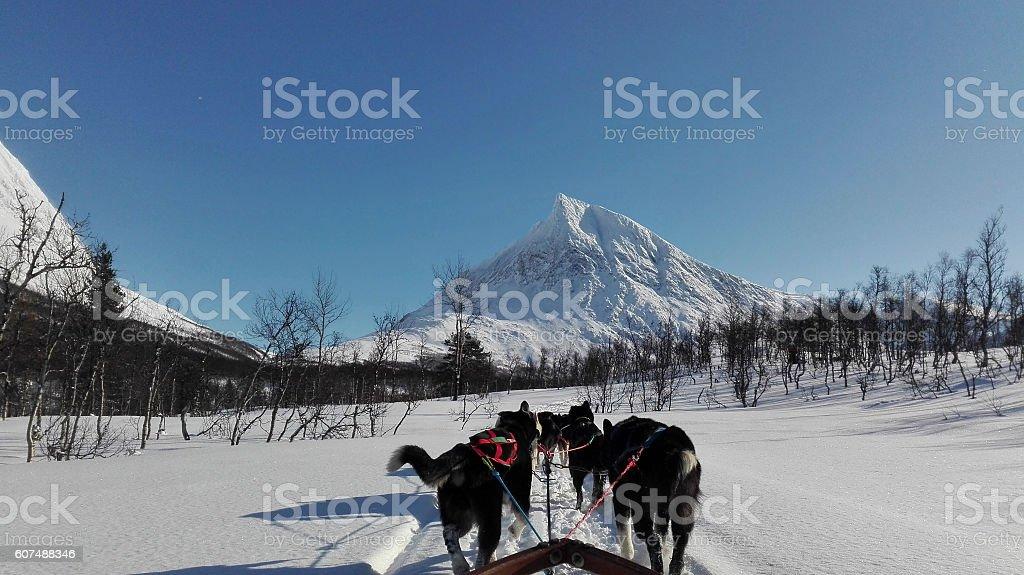 Dogsledding in Norway stock photo