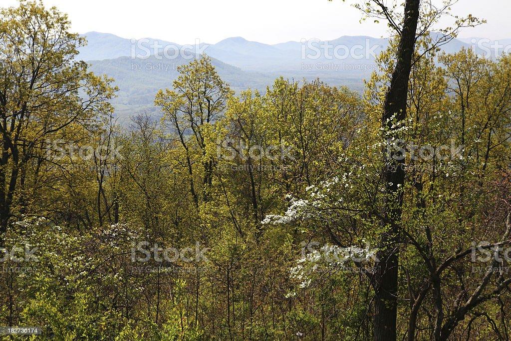 Dogwood on the Blue Ridge Parkway royalty-free stock photo
