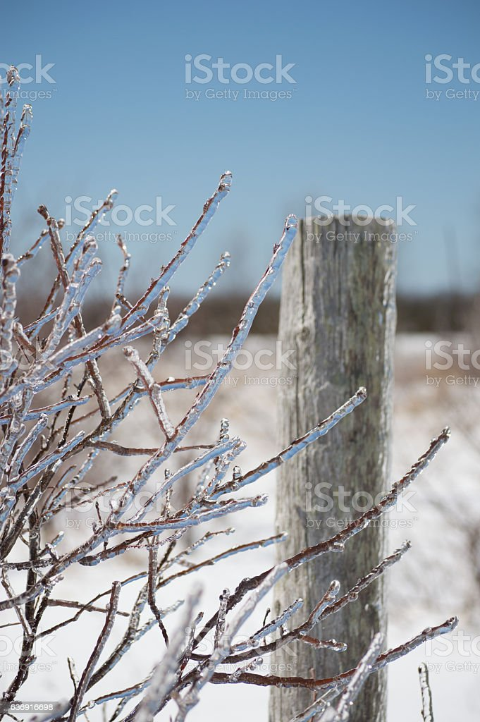 Dogwood twigs after icestorm stock photo