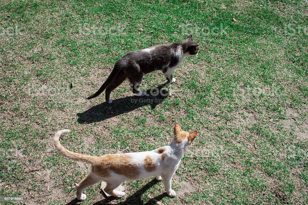 Dois gatos no Aterro do Flamengo stock photo
