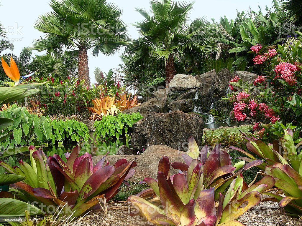 Dole Plantation Garden stock photo