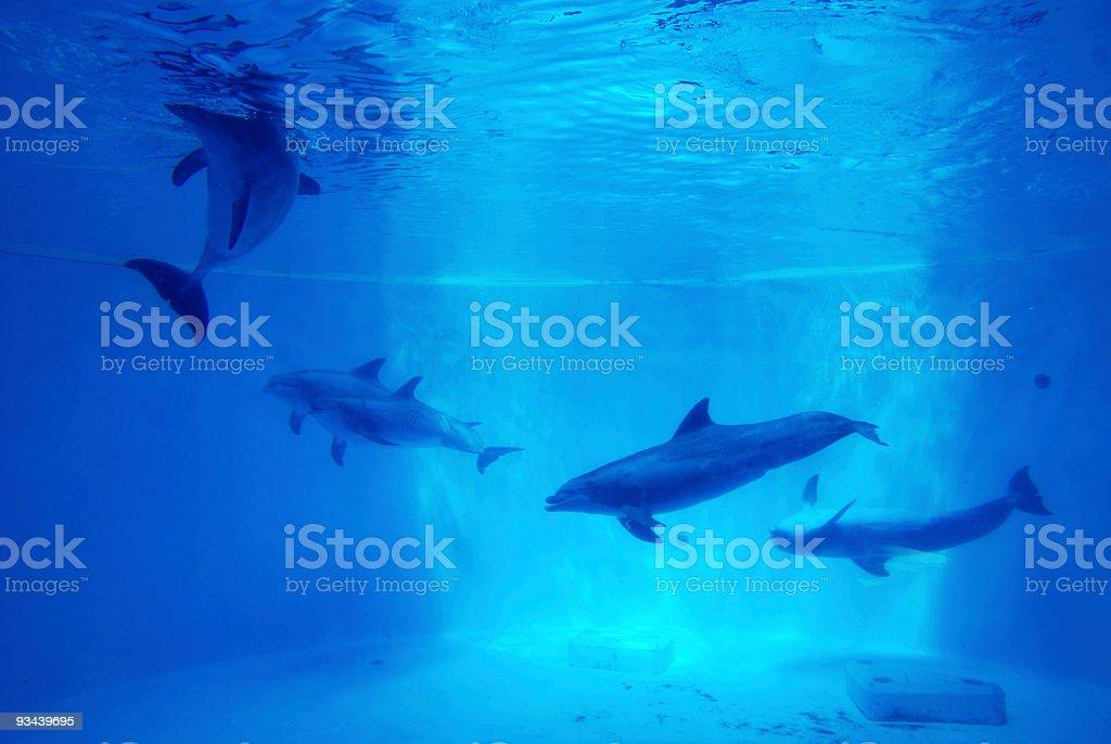 Dolfins underwater background stock photo