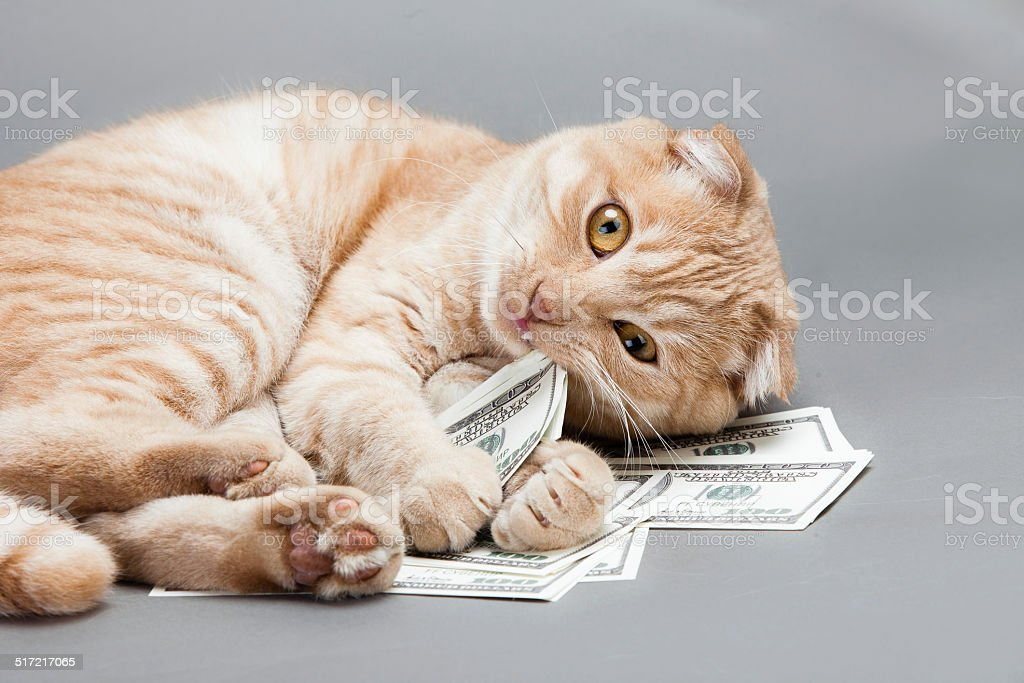 Dollar and a cat stock photo