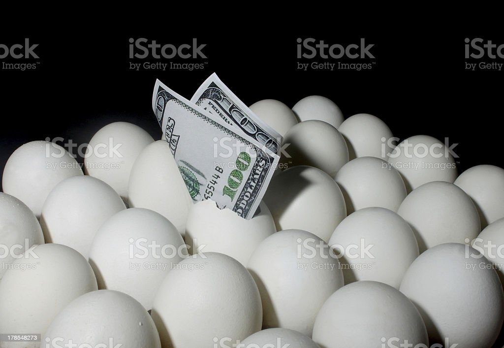 Dollar Bill in Eggs stock photo