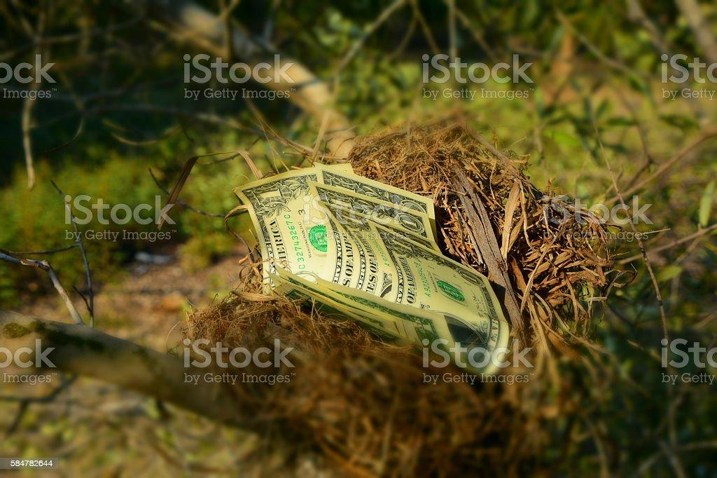 Dollar bills in a bird nest stock photo