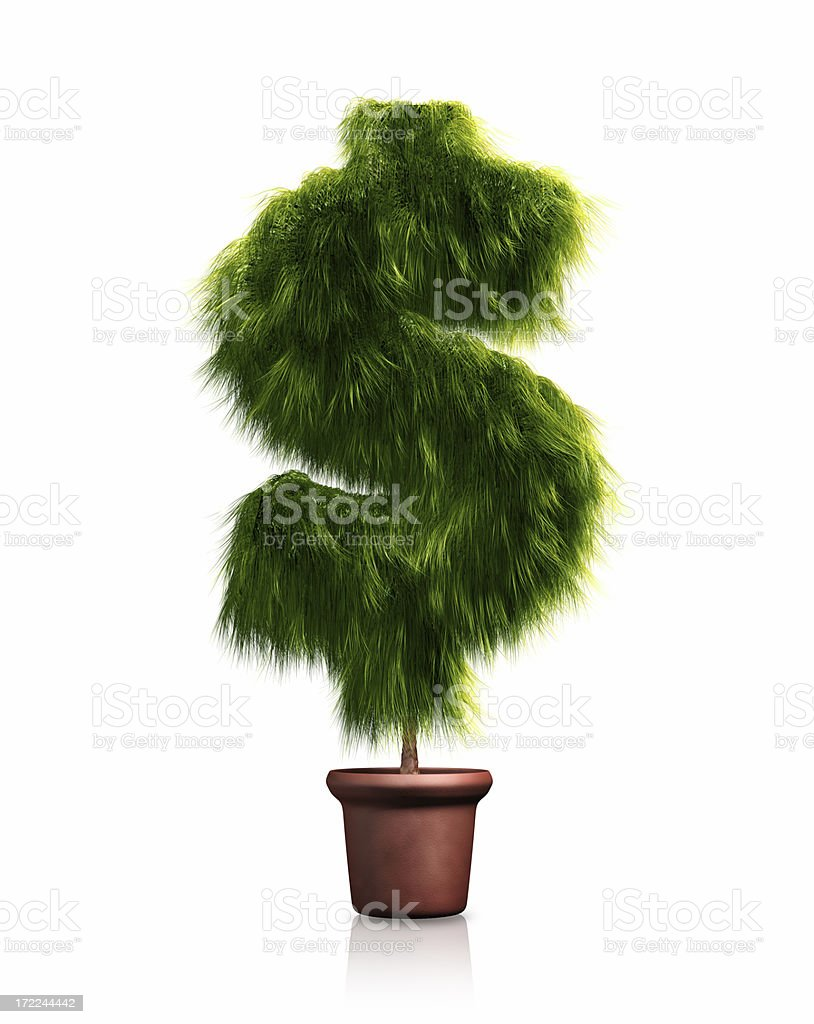 Dollar Money Tree on White(XXL) royalty-free stock photo