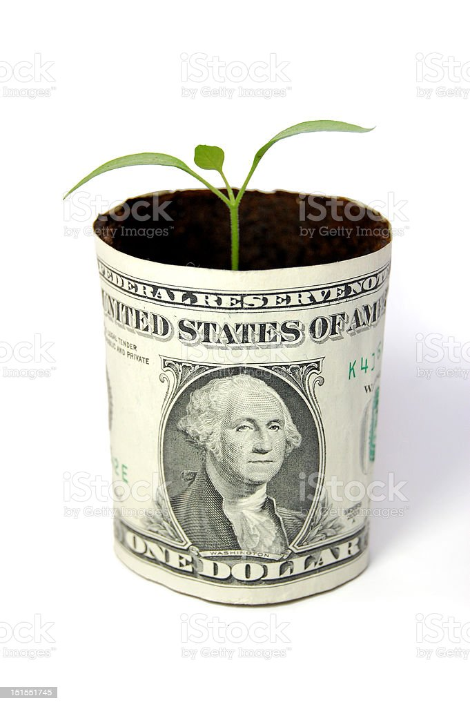 Dollar plant stock photo