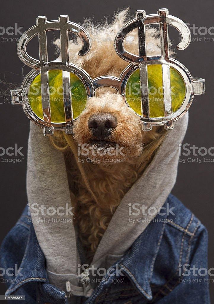 Dollar Sign Dog stock photo