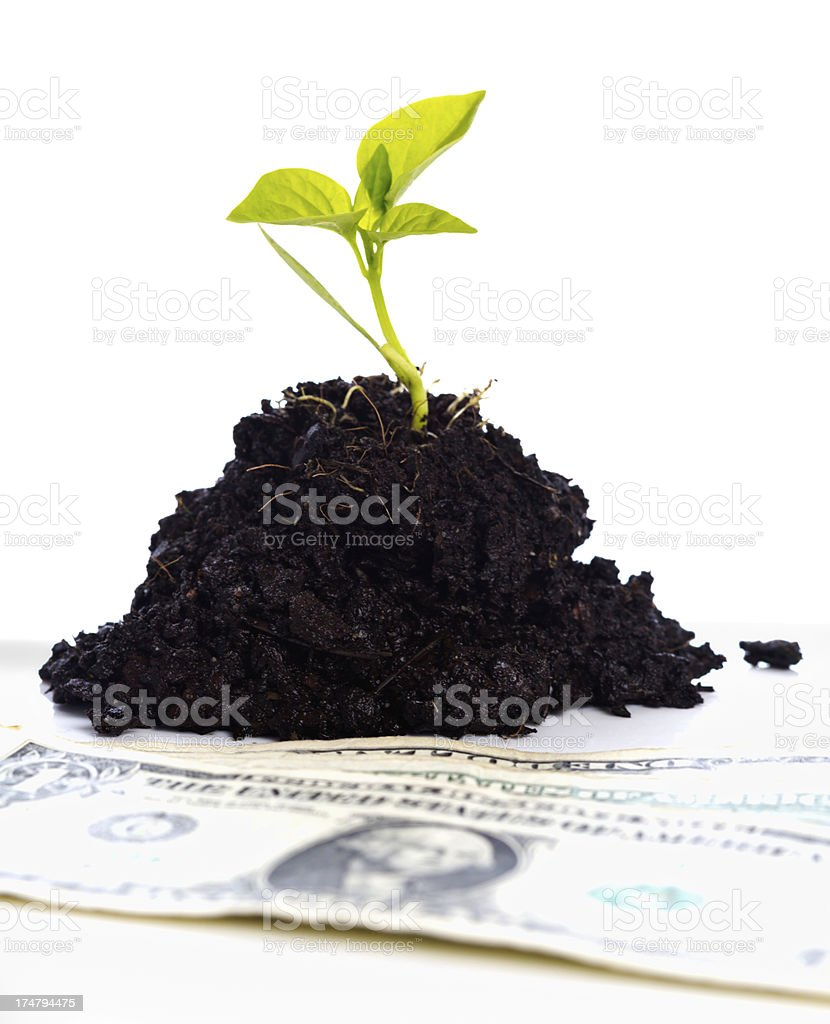 US dollars next to seedling indicating investment and growth royalty-free stock photo