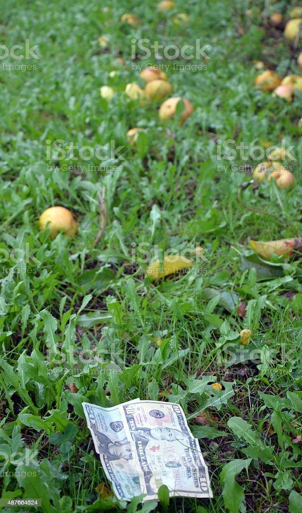 Dollars on apple orchard stock photo