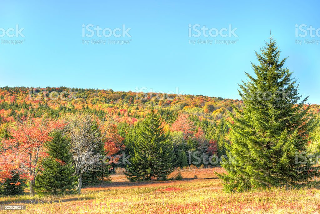 Dolly sods meadow and trail path during autumn stock photo