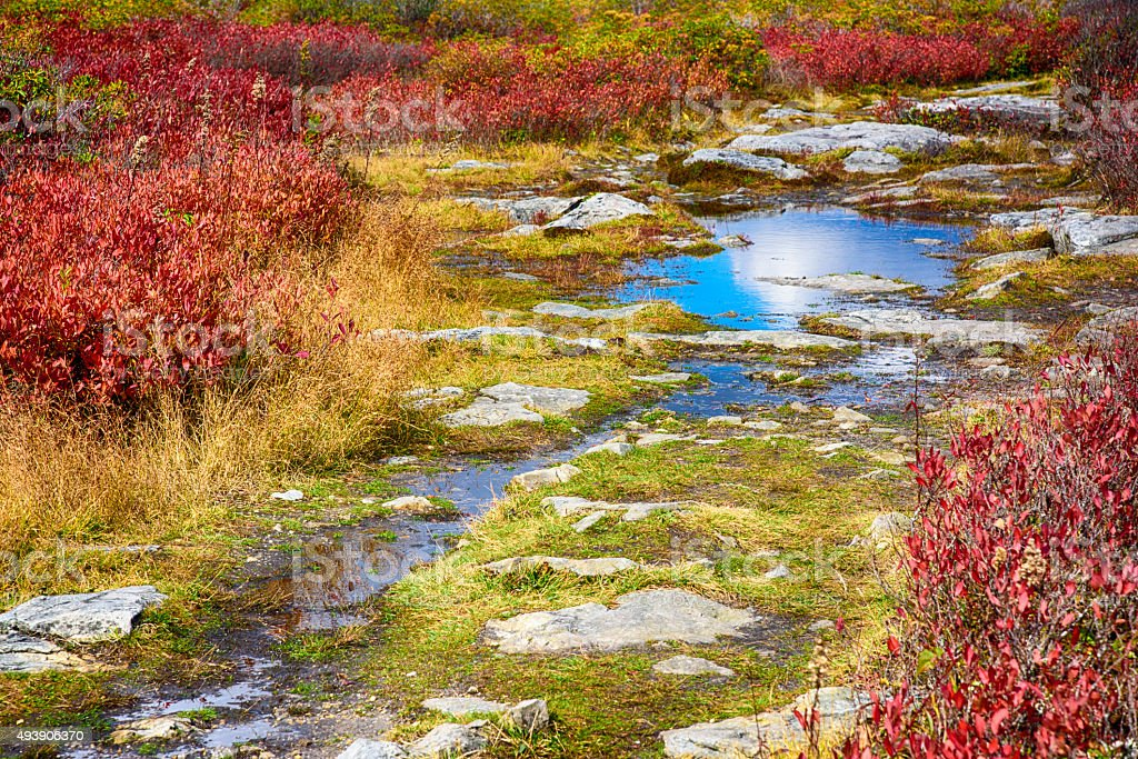Dolly Sods Wilderness Area Autumn Scenic Refecting Water stock photo