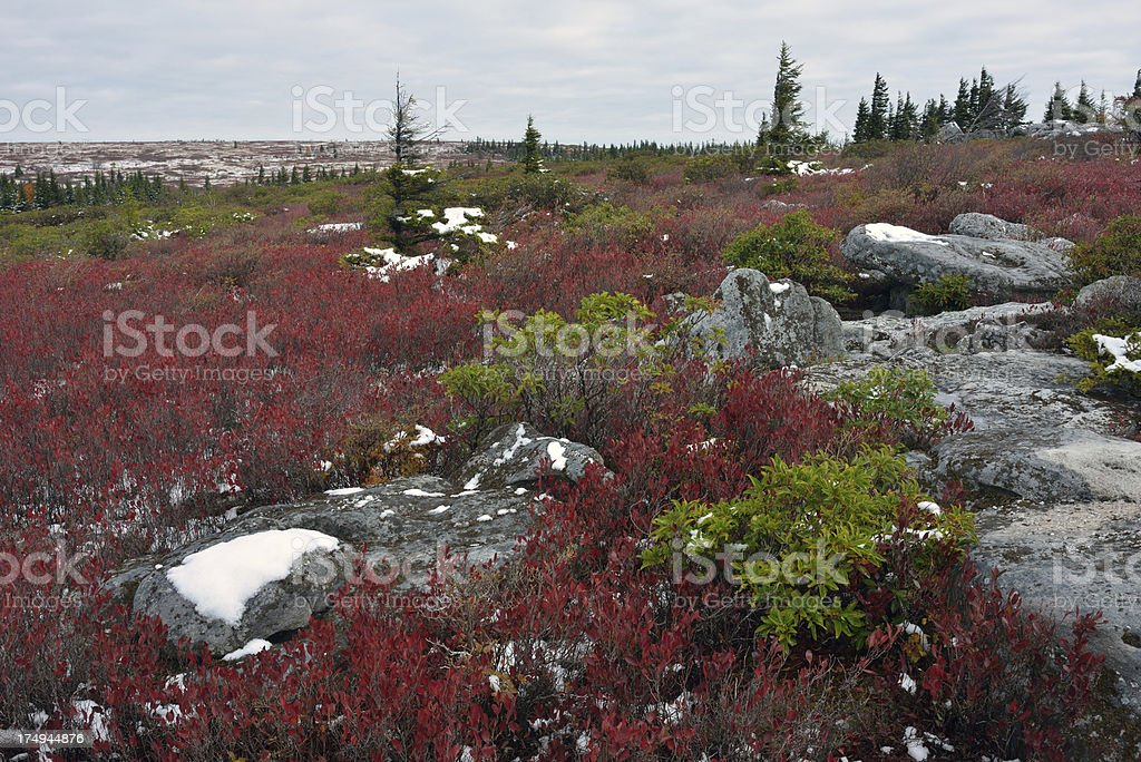 Dolly Sods Wilderness in Fall stock photo