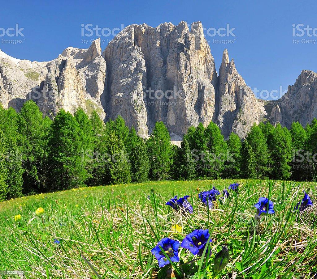 Dolomite peaks, Rosengarten stock photo
