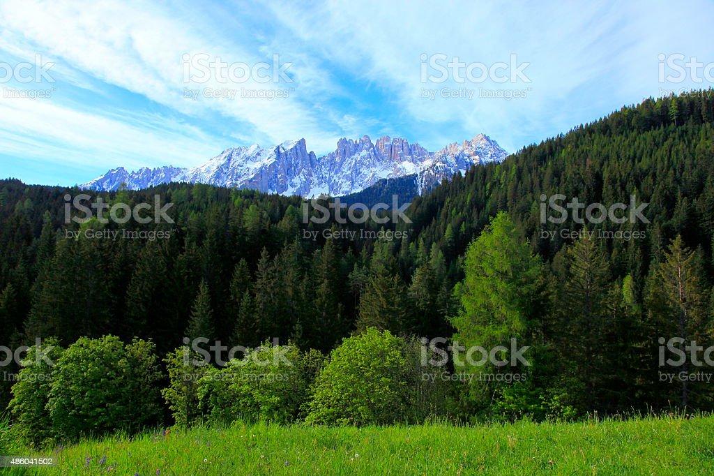 Dolomites alpine latemar, green pine trees near Bolzano, South Tirol stock photo