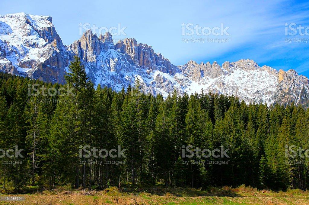 Dolomites alpine latemar, green pine trees valley, Bolzano, South Tirol stock photo