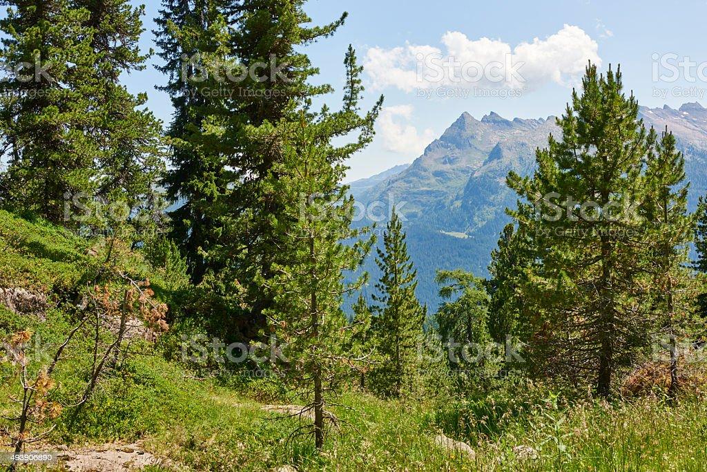 Dolomites Forest stock photo