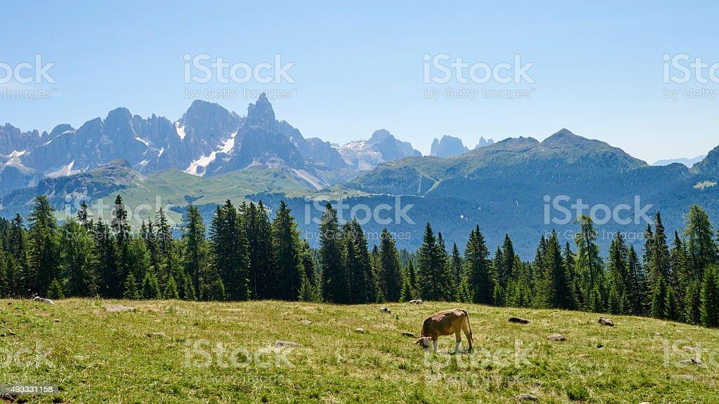Dolomites Pasture stock photo