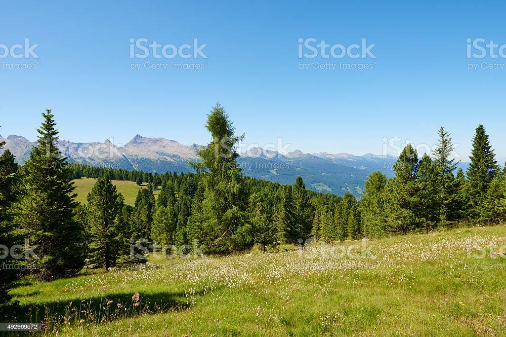 Dolomites Wild Meadow stock photo