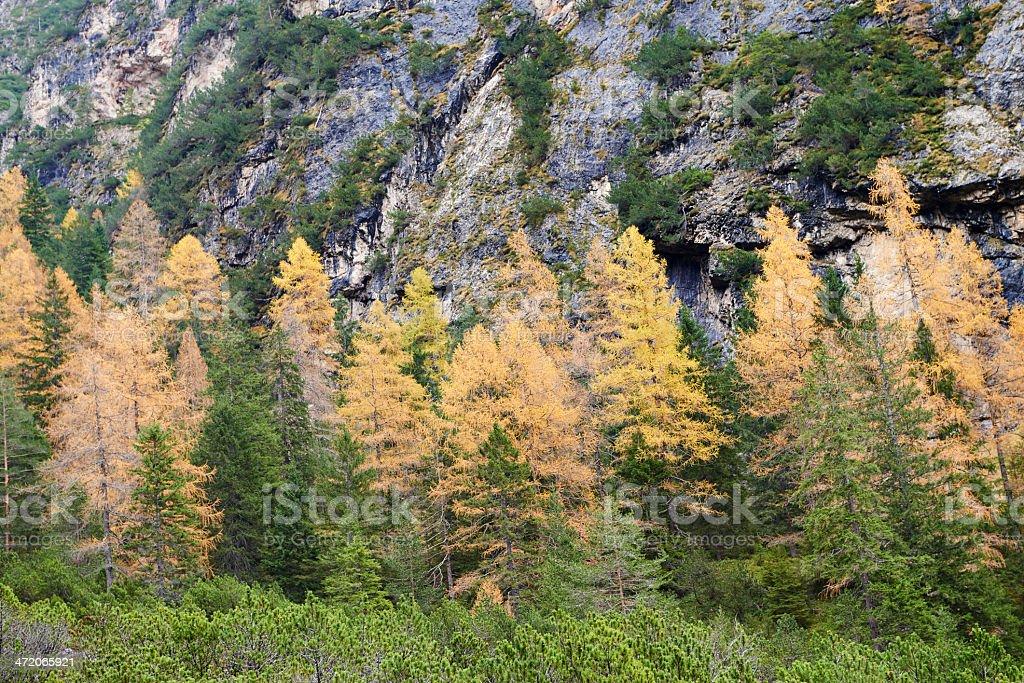 Dolomitic Forest stock photo