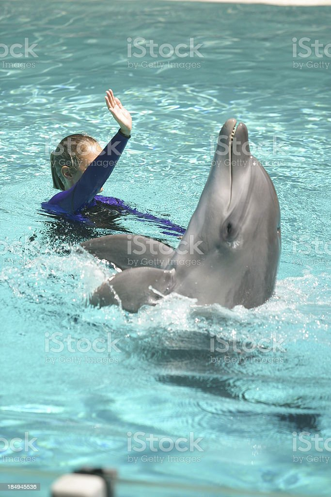 Dolphin 1 royalty-free stock photo