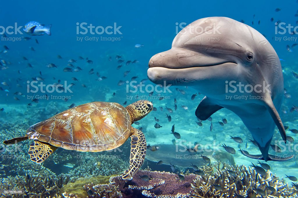 dolphin and turtle underwater on reef stock photo