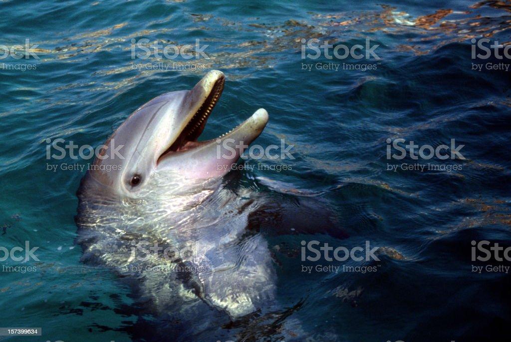 dolphin head stock photo