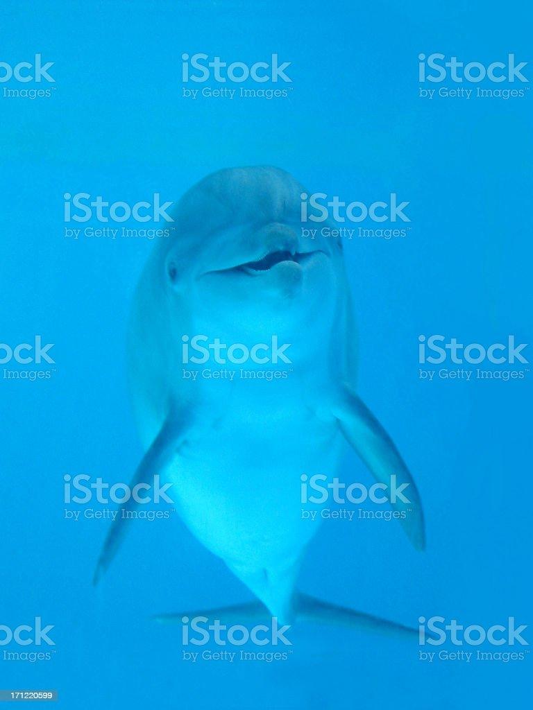 dolphin hello stock photo