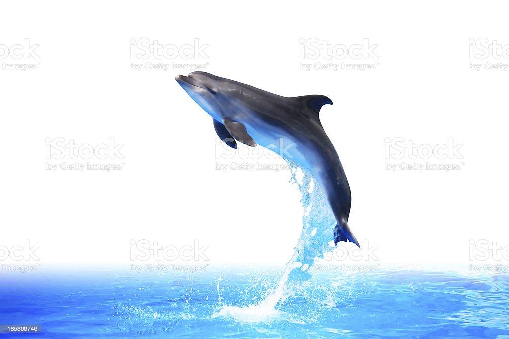 Dolphin High Jump stock photo