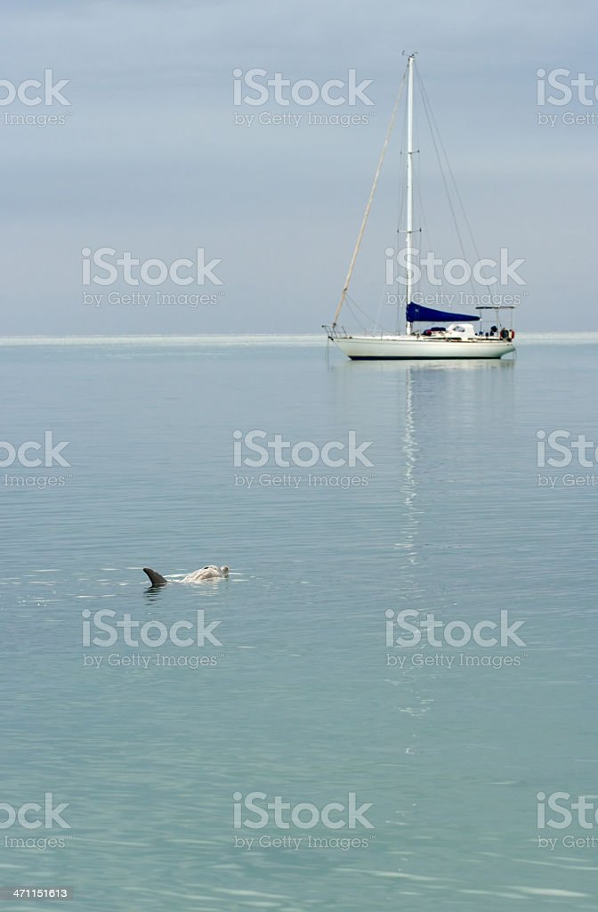 dolphin in the early morning stock photo
