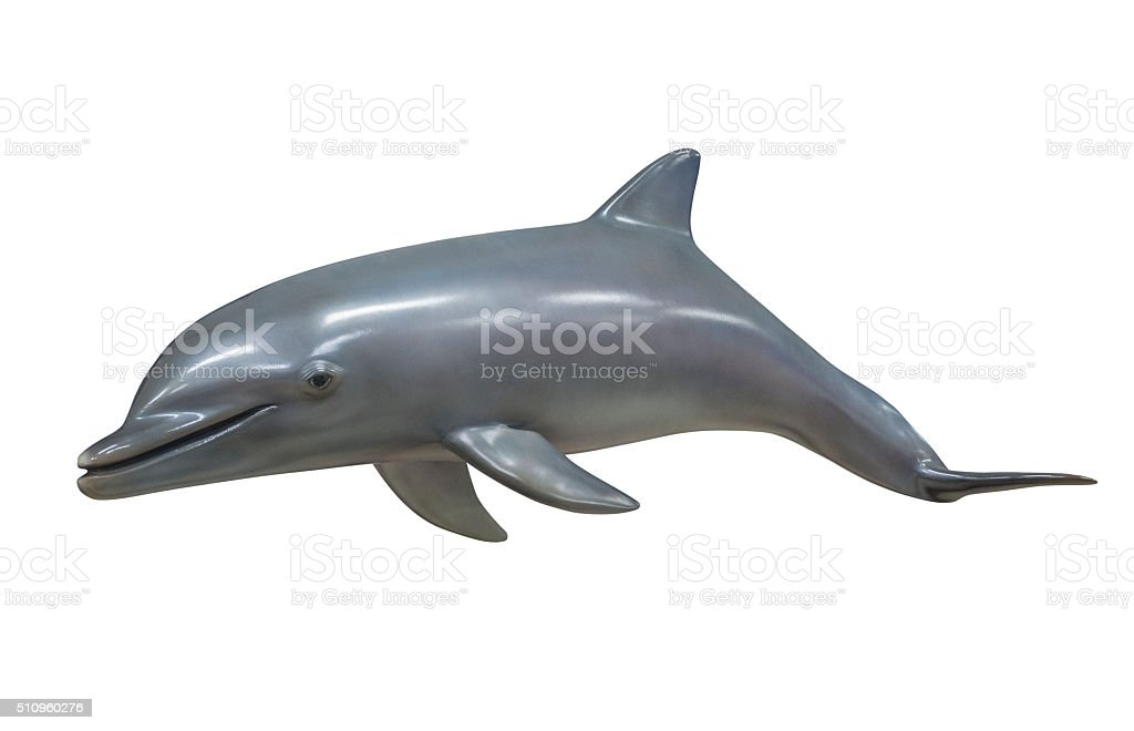 Dolphin, isolated stock photo