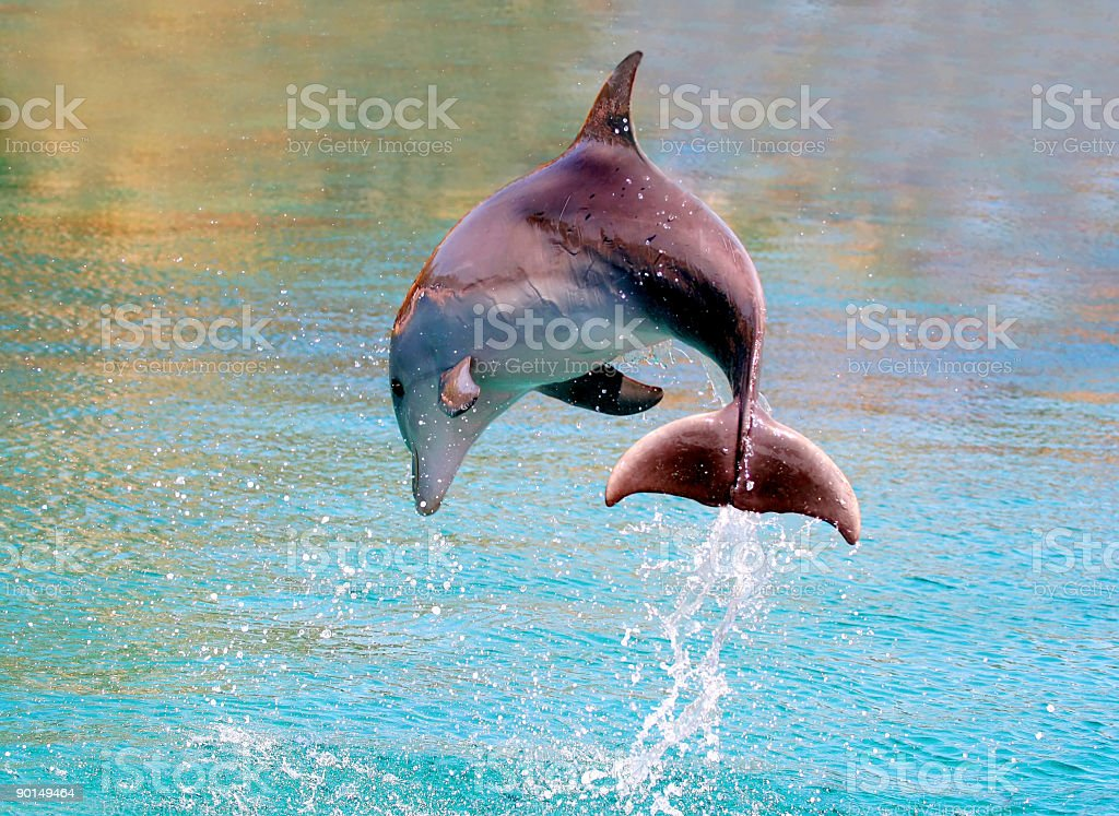 dolphin jump out of the water in sea stock photo