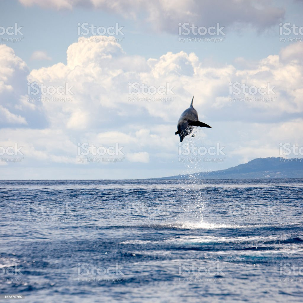 Dolphin jumping into the Air royalty-free stock photo