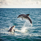 Dolphin Leap