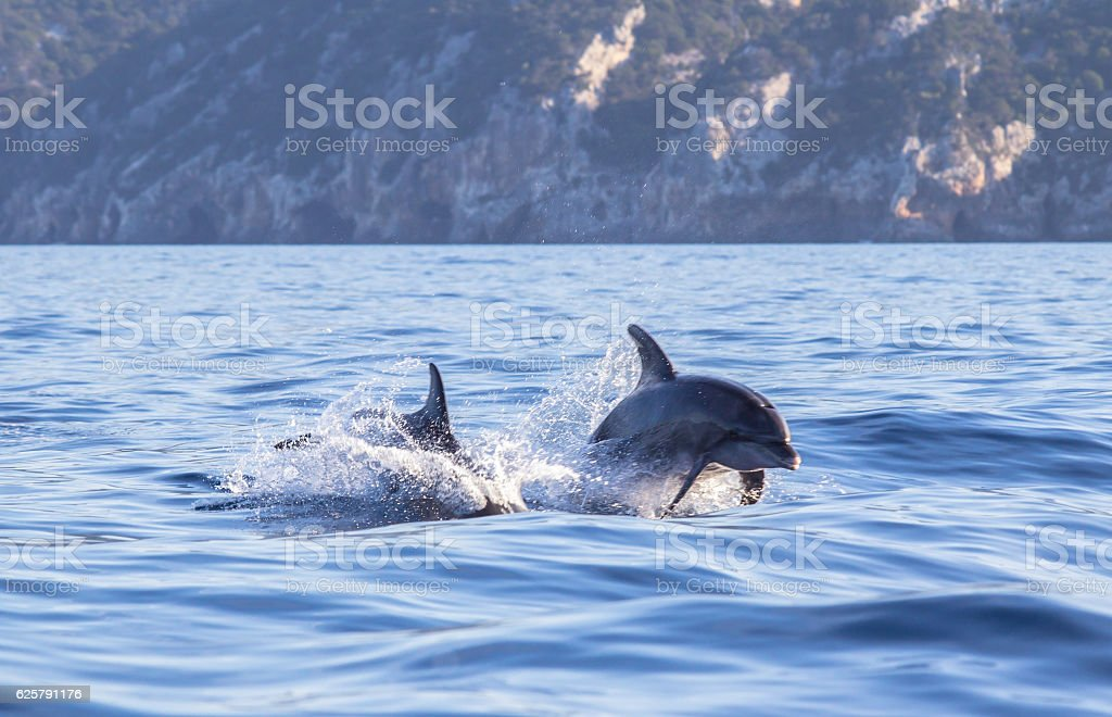 Dolphin leaping out of the blue water in a sea stock photo