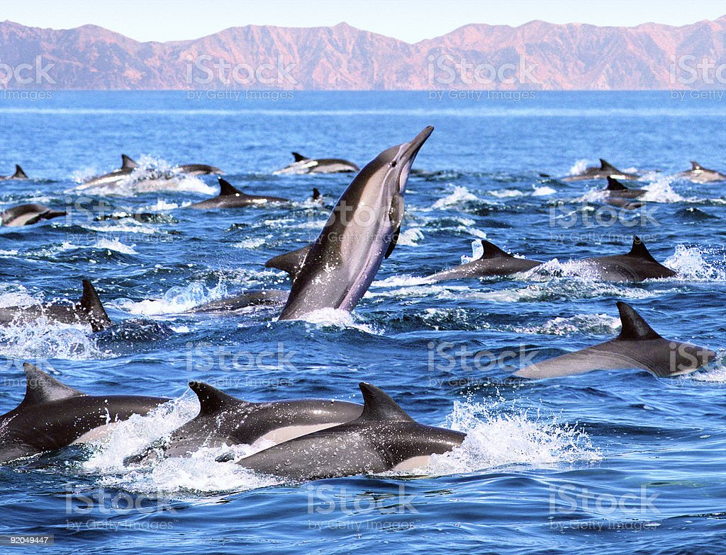 Dolphin Patrol stock photo